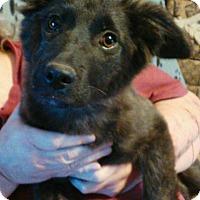Adopt A Pet :: Lady - Trenton, NJ