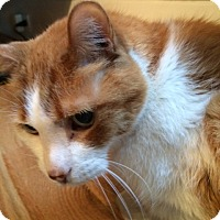 Adopt A Pet :: MacIntosh - Toronto, ON