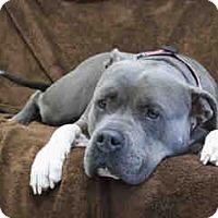 Adopt A Pet :: Daisy - Agoura, CA