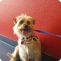 Adopt A Pet :: NOLAND - Phoenix, AZ