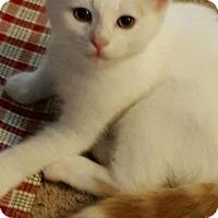 Adopt A Pet :: Biscotti - McDonough, GA