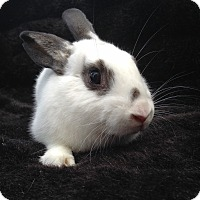 Adopt A Pet :: Arlo - Watauga, TX