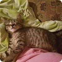 Adopt A Pet :: Rocky - Ortonville, MI