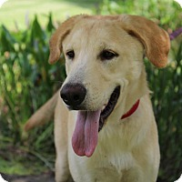 Adopt A Pet :: Jake - SOUTHINGTON, CT