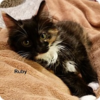 Adopt A Pet :: Ruby - Portland, OR