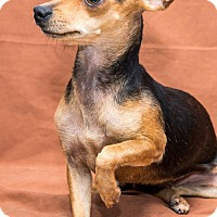 Adopt A Pet :: Tillie - Miami, FL