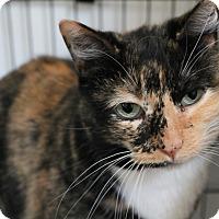 Adopt A Pet :: Sarah Jane - Colville, WA
