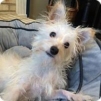 Terrier (Unknown Type, Medium) Mix Dog for adoption in Von Ormy, Texas - Mo