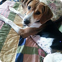 Adopt A Pet :: Schroeder - Wilmington, DE