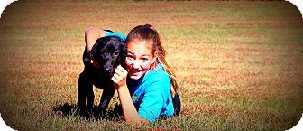 Labrador Retriever Mix Puppy for adoption in Glastonbury, Connecticut - Dugger~ meet me!