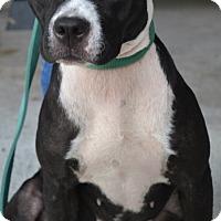 Adopt A Pet :: Lela - Beaumont, TX