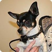 Adopt A Pet :: Carter - Wildomar, CA