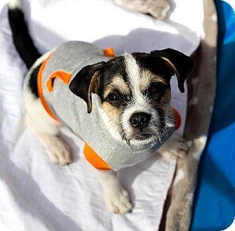 American Bulldog Mix Puppy for adoption in Alpharetta, Georgia - Caspar