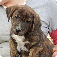 Adopt A Pet :: Echo (5 lb) Cutie Pie! - Williamsport, MD