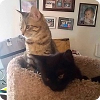 Adopt A Pet :: Zeus - Smithtown, NY