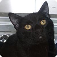 Adopt A Pet :: COASTAL - Gloucester, VA