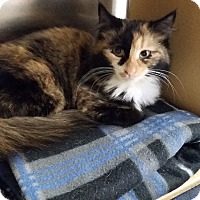 Adopt A Pet :: Mulan (in CT) - Manchester, CT