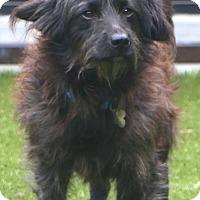 Adopt A Pet :: Harvey - Allentown, PA