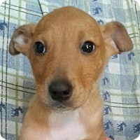 Adopt A Pet :: ripley - Pompton Lakes, NJ
