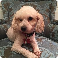 Adopt A Pet :: Dana - VIDEO! - Los Angeles, CA