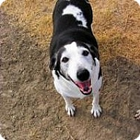Adopt A Pet :: Lady Too - Quinlan, TX