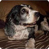 Adopt A Pet :: Isis - Tacoma, WA