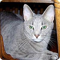 Adopt A Pet :: Blaze - Grand Rapids, MI
