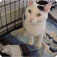 Adopt A Pet :: York - El Cajon, CA