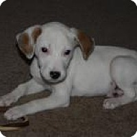 Adopt A Pet :: Lacey - Marlton, NJ