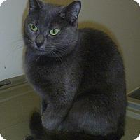 Adopt A Pet :: Savana - Hamburg, NY