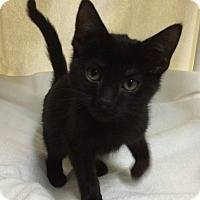 Adopt A Pet :: Nori - New York, NY