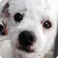 Adopt A Pet :: Buddy-WATCH MY VIDEO!!! - Irvine, CA