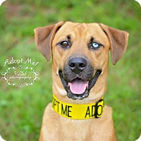 Adopt A Pet :: Jack - Fort Valley, GA