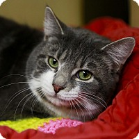 Adopt A Pet :: Christopher - Kettering, OH