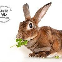 Adopt A Pet :: Peppermint Patty - Alexandria, VA