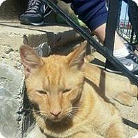 Adopt A Pet :: Simba - Trevose, PA