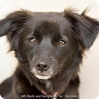 Adopt A Pet :: Chrissy - Scottsdale, AZ