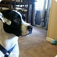 Adopt A Pet :: ChaCha - Barnegat, NJ