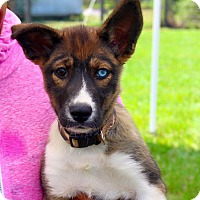 Adopt A Pet :: Bonnie - Fort Valley, GA