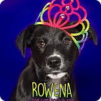 Adopt A Pet :: Rowena - Lyndhurst, NJ