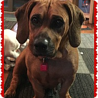 Adopt A Pet :: Disney - Elburn, IL