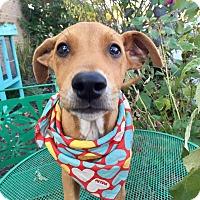 Adopt A Pet :: Buddy - Wilmington, DE