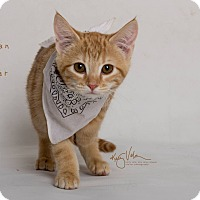 Adopt A Pet :: James Dean - Riverside, CA