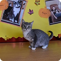 Adopt A Pet :: Dorothy - North Judson, IN