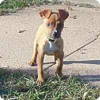 Adopt A Pet :: Oliver - Mobile, AL