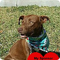 Adopt A Pet :: Ripley - San Leon, TX