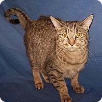 Adopt A Pet :: Sasha - Colorado Springs, CO