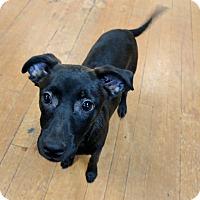 Adopt A Pet :: Matthew - Foster, RI