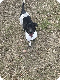 Terrier (Unknown Type, Medium) Mix Dog for adoption in Jackson, Mississippi - Freckles