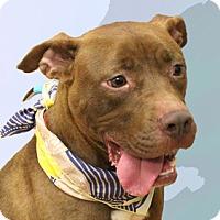 Adopt A Pet :: Lanie - Cincinnati, OH